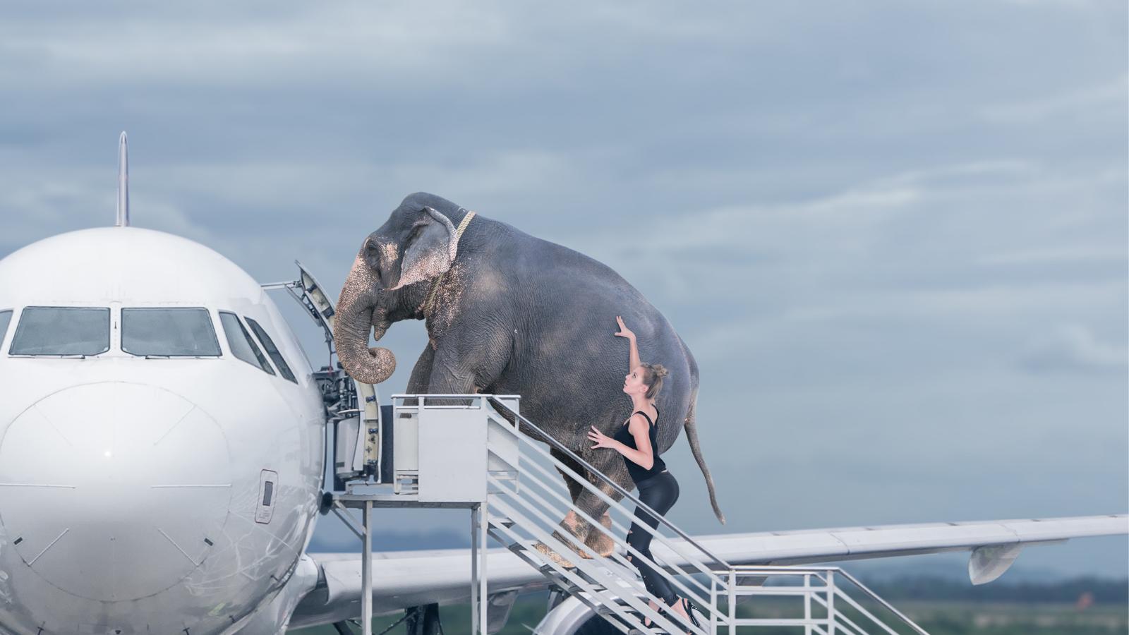Loading elephant onto airplane